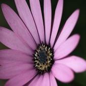 1420885_flower
