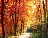 autumn-boulevard-1426751-m copy