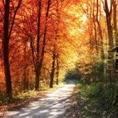 autumn-boulevard-1426751-m