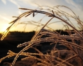 morning-sun-1377456-m copy