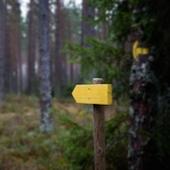 arrow-in-the-woods-1373194-m